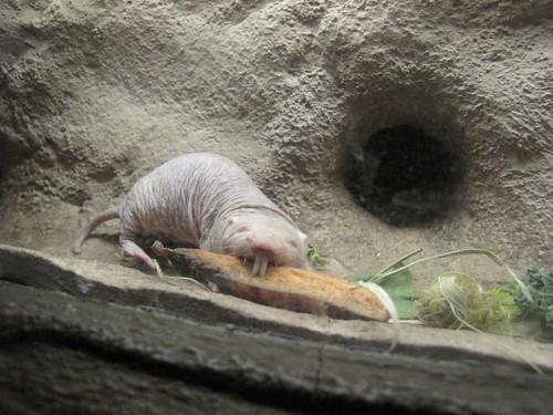 Zoo 0390