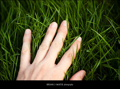 don't forget to stop and touch the grass [995] (brianjmatis) Tags: nature grass hand touch lawn photoaday project365