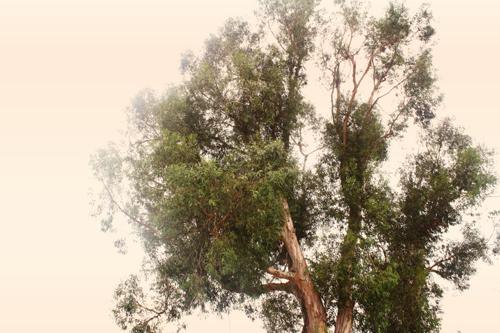 {september} trees