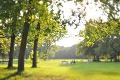 Indian Summer (pixelblume) Tags: summer english garden munich mnchen bokeh indian shift tilt garten muenchen arax englischer