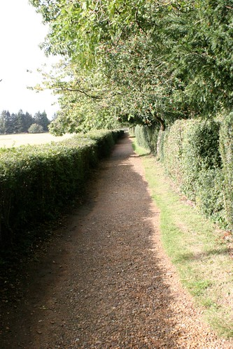 Darwin's Sandwalk, looking back toward Down House