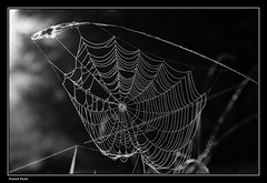 Toile d'araigne dans la lumire du matin ** Spider web in the morning light ** (francky25) Tags: morning light white black macro 50mm la spider lumire web sigma du dans toile matin daraigne doubs comt franche alaise