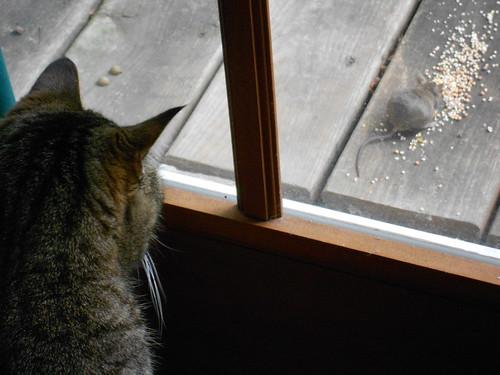Cat & Mouse