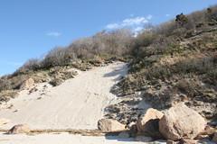 Eroding Coastal Bluff and Glacial Erratics (sandy richard) Tags: geology wildwood wildwoodstatepark newyorkstateparks longislandbeaches sandyrichard longislandgeology sandrarichard wildwoodstateparkgeology