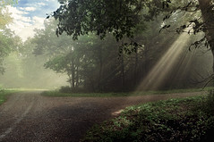 The Right Path... (jaegemt1) Tags: road sun mist green nature fog forest sunrise landscape path bluesky sunrays countryroad jaegemt1