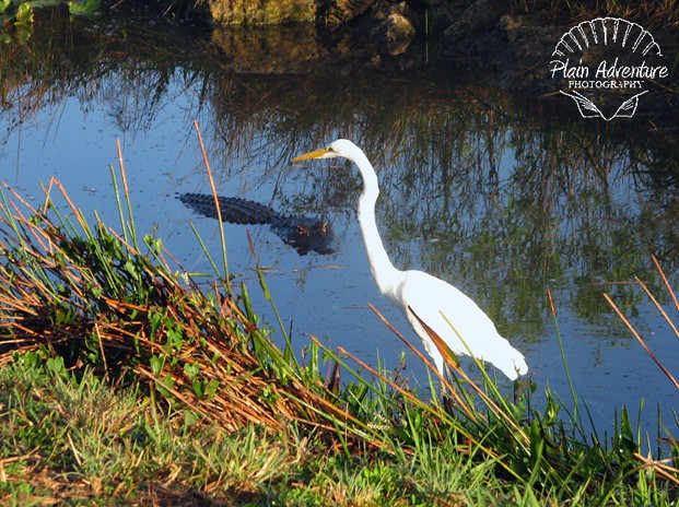Gator and Crane
