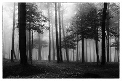 IMG_0037 (Pixally) Tags: travel b trees blackandwhite bw white mist black tree travelling nature monochrome fog rural forest trekking trek landscape asian landscapes countryside globe woods asia southeastasia moody locals village natural candid w stock foggy documentary posed images villages vietnam spooky journey stockphotos mysterious getty local traveling hanoi excitement discovery tinted forests less journalism reuters journeys observed reportage nationalgeographic traveled escapism observer stockphotography trotting roadslesstraveled dreamtime bavi shutterstock nationalgeaographic bav bun