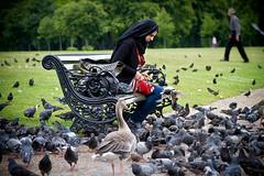 The birds (Mauritzson Foto) Tags: park uk summer england people woman man london birds bench hydepark sommar fåglar feedingbirds bänk människor kvinna matafåglar