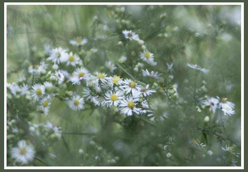 meadow4_lg