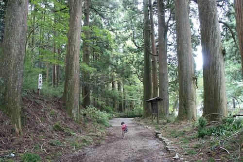 旧杉並木 比較図
