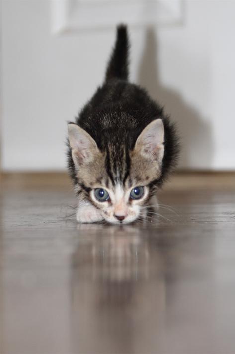092111_kittens06