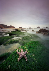 Seal Rock no longer belongs to the seals (Zeb Andrews) Tags: ocean green film beach oregon landscape coast starfish pinhole pacificocean pacificnorthwest oregoncoast westcoast sealrock bluemooncamera holga120wpc