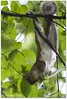 Equilibrismi 1 (*s*a*b*r*i*n*a* presente indisciplinata) Tags: usa ny newyork nature canon ilovenature squirrel centralpark 7d scoiattolo equilibrio ilovenewyork atestaingiù ef75300mmf456 equilibrismi