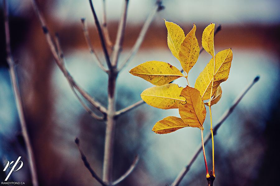 ~ Fall 2011 ~