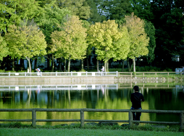 池端の木立