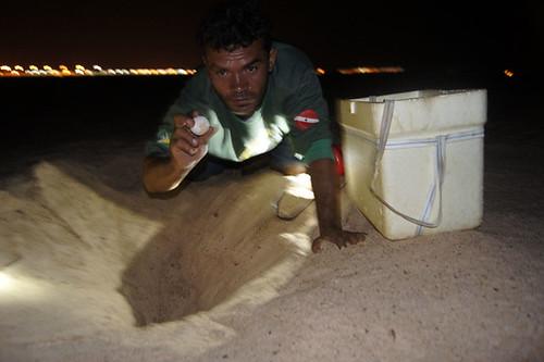 Coleta de Ovo na Praia do Tucunaré