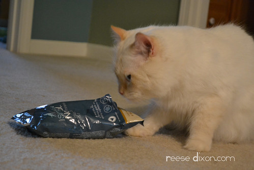 Cat eating dog food