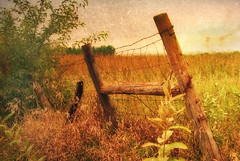 Fall Silently Falls (Dave Linscheid) Tags: autumn usa fall texture minnesota rural fence farm country agriculture watonwancounty magicunicornverybest blinkagain