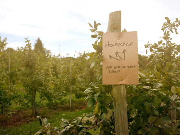 Honey-Pot-Hill-Orchards-7