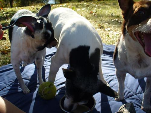2011-09-30 - Licking Mom's Bowl - 0003