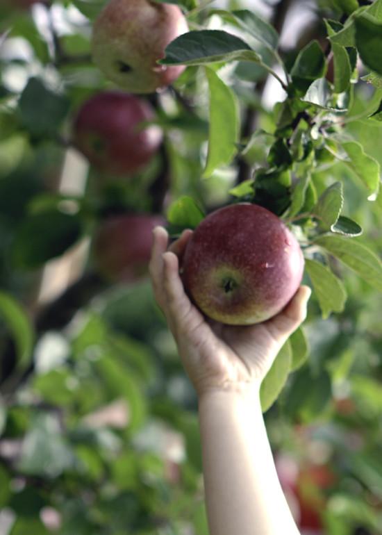 abi reaching apple