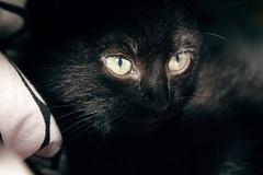 Batman (kaleonel) Tags: karen preto gato batman leonel kaleonel