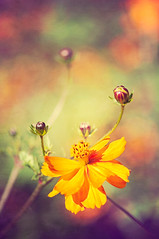 she dreams in color (pixelmama) Tags: flowers autumn color fall texture watercolor illinois bokeh aurora aquarius indiansummer flypaper phillipspark shedreamsincolor dontyou pixelmama iveheardthatsomepeopledont