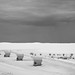 White Sands New Mexico-1.jpg