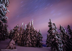 Snowy Nights (Darren White Photography) Tags: christmas longexposure winter cold nature oregon stars holidays freezing pacificnorthwest nightsky christmastrees mounthood darrenwhite darrenwhitephotography