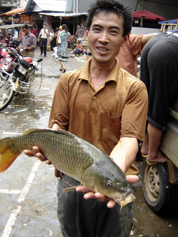 Fish market in Xi Shuang Banna, Yunnan Province, China. Photo by Francis Murray, 2006