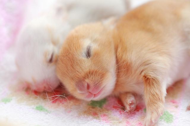 cute animal (10)