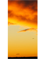 sky_burner (jaarockin) Tags: autumn red sky orange southwest bird fall nature yellow clouds sunrise earlyriser skyburner