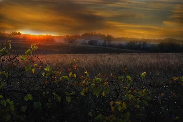 Ivanhoe Rd Sunset