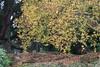 Ian'sDigitalPhotos - Autumn (ianharrywebb) Tags: flowers autumn iansdigitalphotos yahoo:yourpictures=autumn yahoo:yourpictures=nature