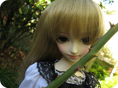 White Rose (Onizel) Tags: bjd shoyo dollzone