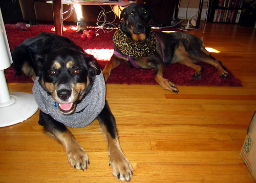 Dog divas