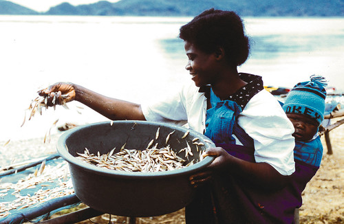 Sub Saharan African woman drying fish, Africa, photo by Patrick Dugan, 2006