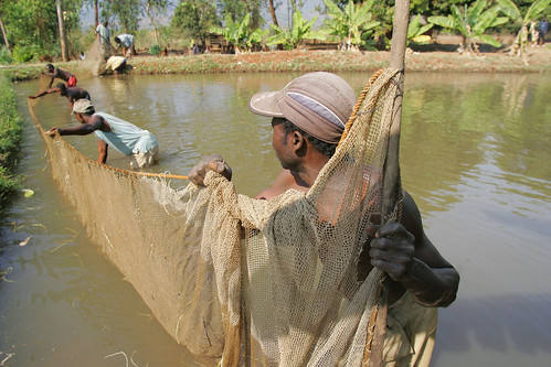 Farming fish. Photo by Stevie Mann, 2007.