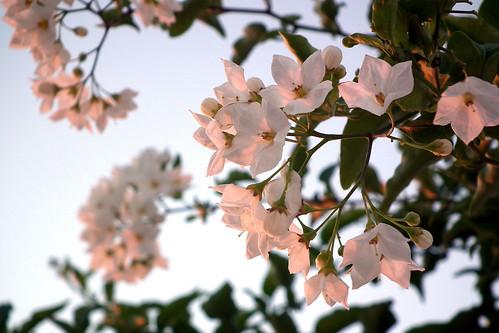 DSCF3944 (Invitacion floral) by Luis Armando Encinas Ramirez (i_real_es)