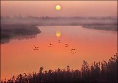The Dawn Patrol (adrians_art) Tags: trees winter mist water birds fog sunrise reflections reeds flight silhouettes