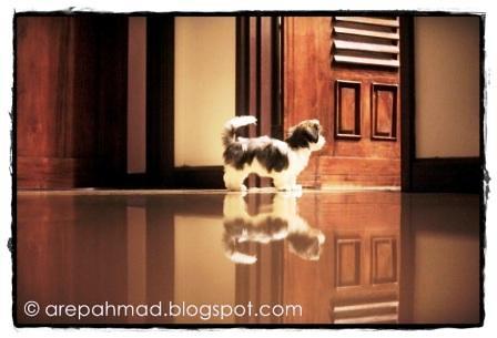 Nanu Baharuddin Pegang Dan Tidur Dengan Anjing3[3]