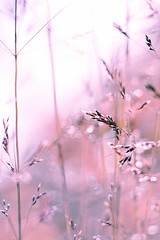 September 2/9 (ice-cold photography) Tags: autumn macro fall dof emotion wind straw windy september m42 vegetation