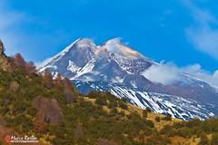 Lo chiamavano pit (Marco Restivo) Tags: flora vulcano vegetazione valledelbove etnasicilia acquarocca