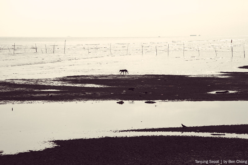 Tanjung Sepat - Lonely dog
