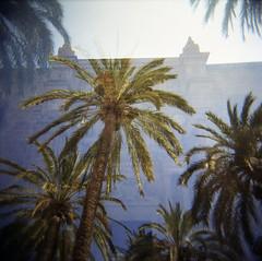 [waving palms] ([noone]) Tags: espaa 120 6x6 holga lomo xpro crossprocessed procesocruzado spain exposure double andalucia medium format almeria medio eddievedder 2010 doble esposizione formato cfn esposicion formado doppia wavingpalms processoinverso