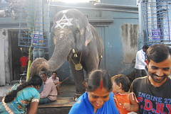 Temple and worshippers (Admanchester) Tags: india elephant temple hindu tamilnadu pondicherry spnp