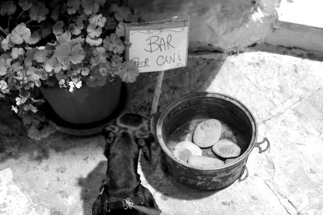Bar per cani