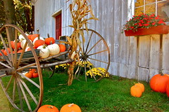 pumpkin display (Kadeefoto) Tags: fall wagon shelburnefarm farm massachusetts pumpkins applepicking stowema