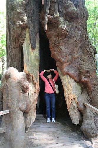 Saranghae at Muir Woods, San Francisco