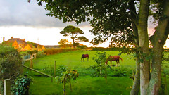 Horses in A Field (garryknight) Tags: horse sunlight field canon powershot isleofwight creativecommons lightroom brighstone sx220hs